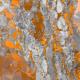 Fabric 20564 | grey dots