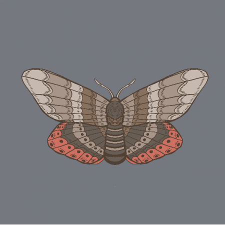 Fabric 20784 | ćma (jesień 7)