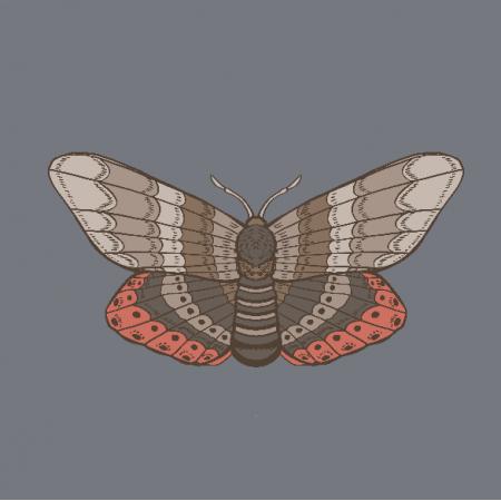 20784   ćma (jesień 7)