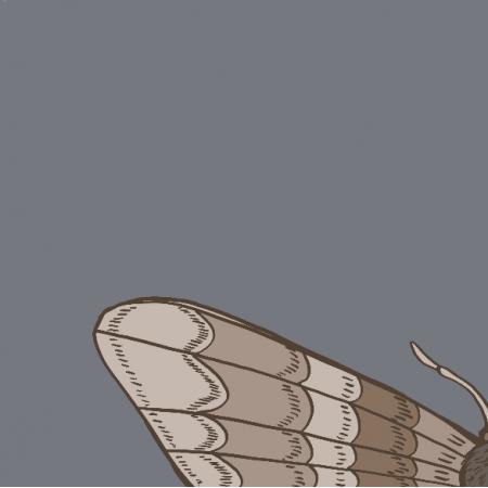 Fabric 20785 | ćma 2 (jesień 7)