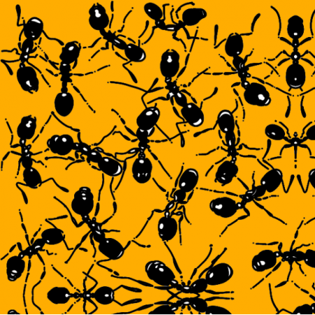 21190 | Mrówki na żółtym tle