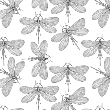 Fabric 21905 | Dragonfly on white