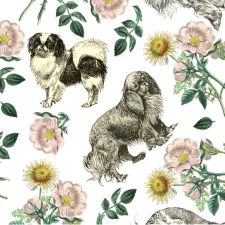 22654 | Psy Cavalier King Charles Spaniel i Dzika RÓŻA - BIAŁE TŁO