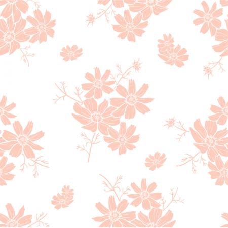24369   Kwiaty kosmos na białym tle