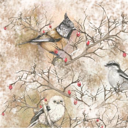 Tkanina 24539 | zimowe ptaki