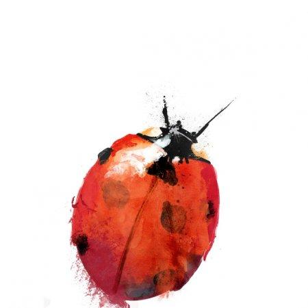 Fabric 449 | ladybird