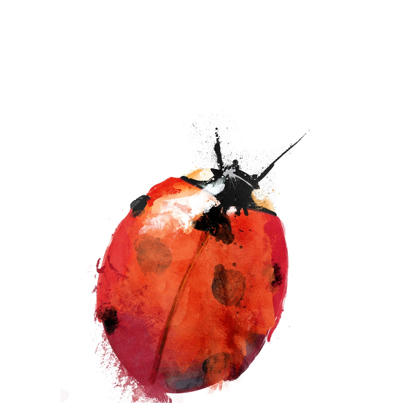 449 | ladybird