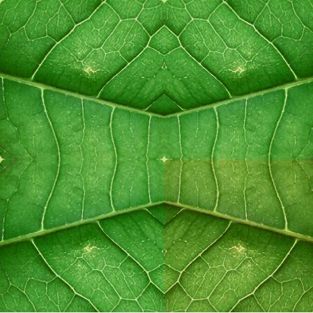 3696 | zielono mi