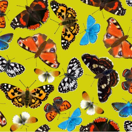 Fabric 5349 | Motyle