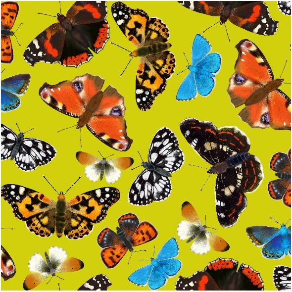 5349 | Motyle