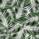 Fabric 6575 | Palms