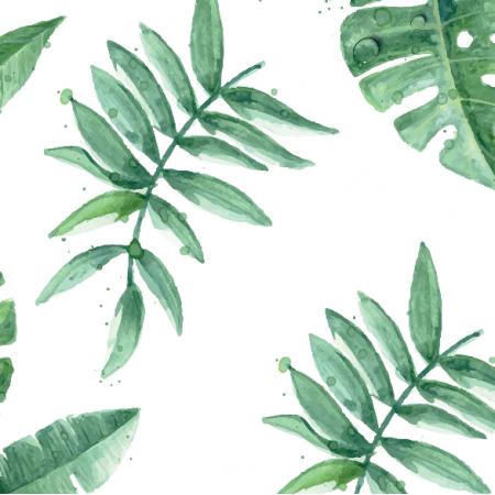6957   wodne palmy zielone
