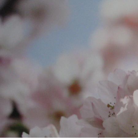 7601 | kwiaty