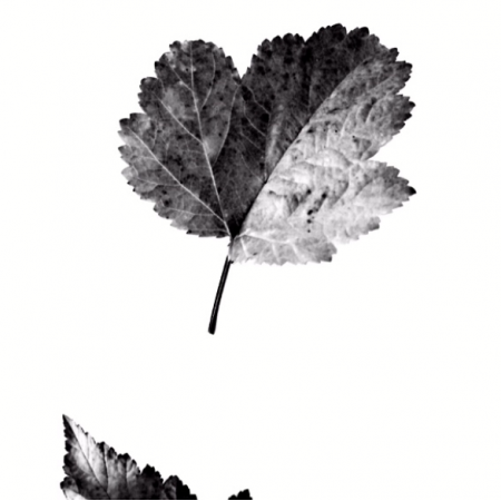 Fabric 8060 | Nature 1