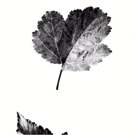 Tkanina 8060 | Nature 1