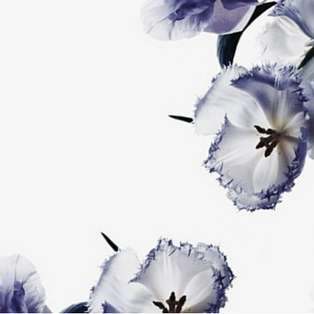 8152 | FLOWERS 2