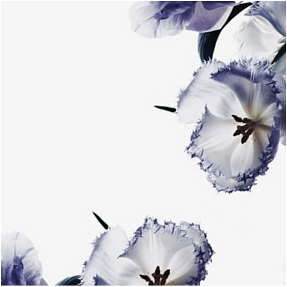 Fabric 8152 | FLOWERS 2
