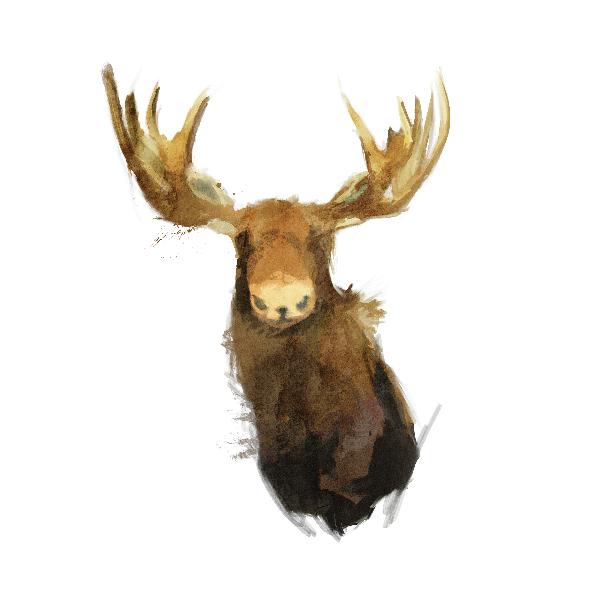1028 | moose_kupon
