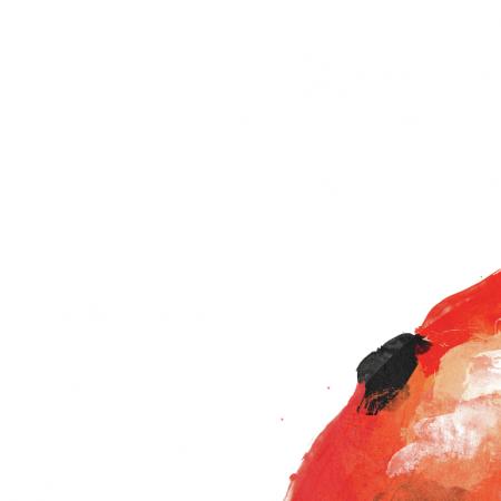 Tkanina 1054   Ladybird_kupon