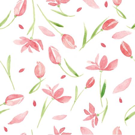 9664   Tulip dream0