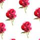 Tkanina 10274   Róża mała