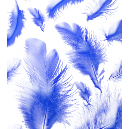 11208 | blue feathers0