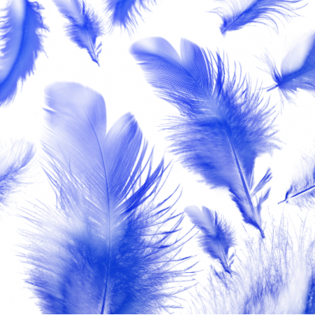 11209 | blue feathers