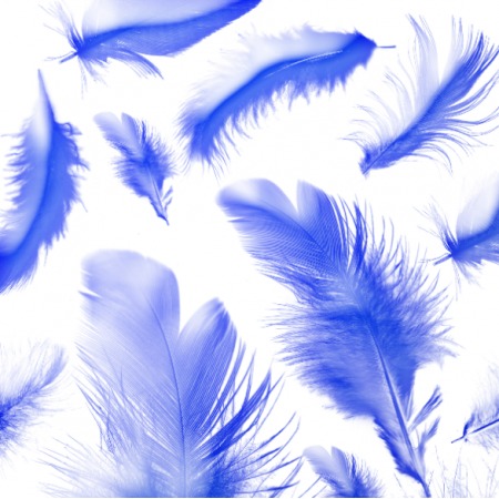 11216 | blue feathers