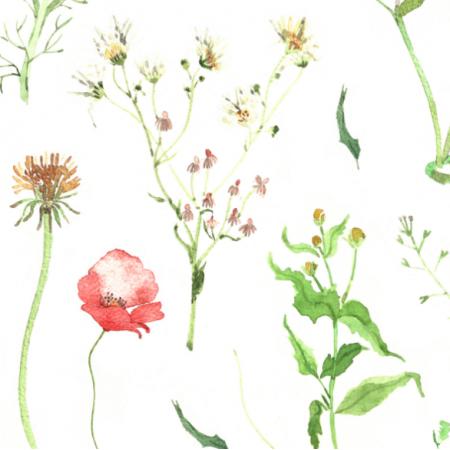 11658 | Kwiaty pole - l