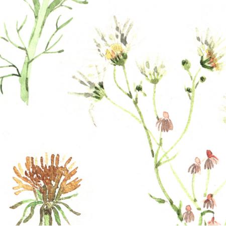 Tkanina 11660 | Kwiaty polne - XL