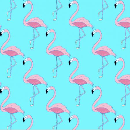 11662 | Flamingi