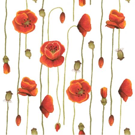 11780 | polish poppy flower