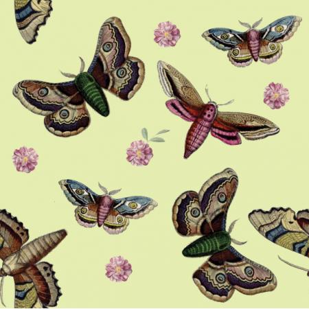 12064 | motyle na słomkowym