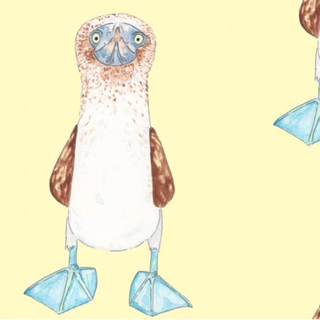 12662 | Głuptak niebieskonogi