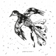 Tkanina 12664   Flying Bird - wihte-black pattern for pillow