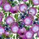 Tkanina 14482   Pomegranate