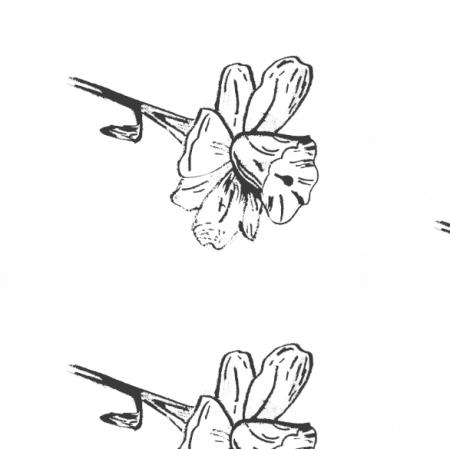 Fabric 14632 | Kwiatowy szkic