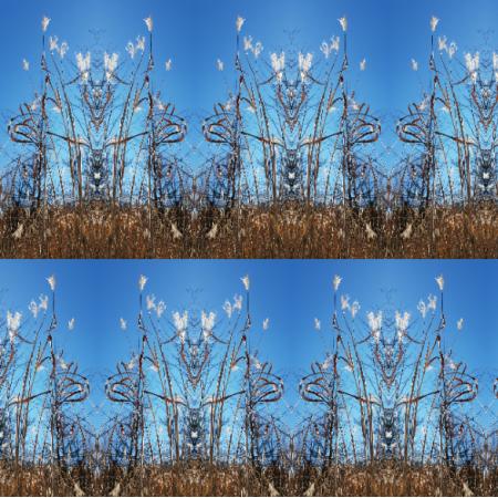 15298 | Dzikie trawy