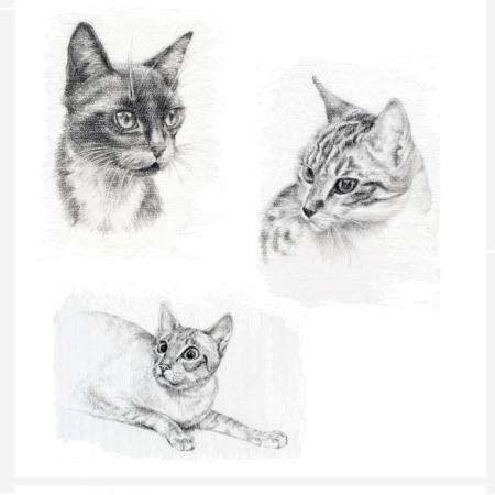 Fabric 15384 | Cats - Koty