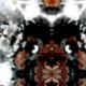 Tkanina 15561 | DARK SHADOW 1