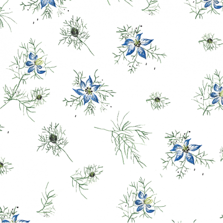15668 | kwiat czarnuszki