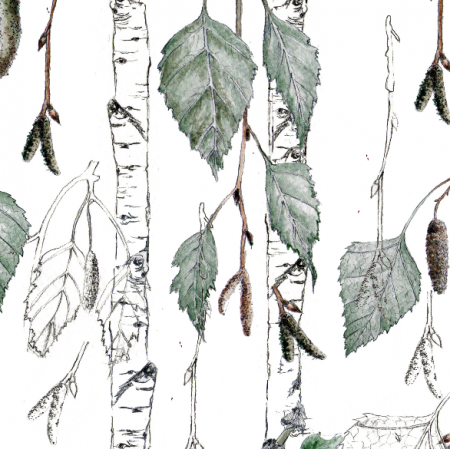 Fabric 15717 | Brzoza