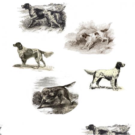 15816   PSY MYŚLIWSKIE SETERY - Setters Hunting dogs