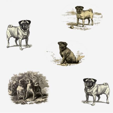 Tkanina 15818 | Psy Mopsy - Pugs Dogs