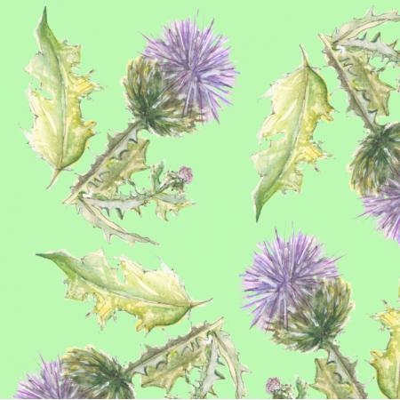 15827 | oset violetosset0