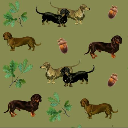 15872 | PSY Jamniki - Dachshund Dogs