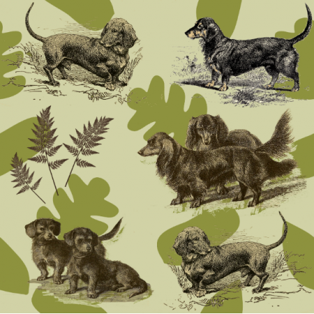 15876 | PSY MYŚLIWSKIE JAMNIKI - HUNTING DOGS DACHSHUNDS