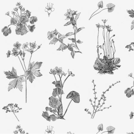 Fabric 15896 | RYSUNKI BOTANICZNE - BOTANICAL DRAWING