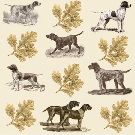 15897 | PSY MYŚLIWSKIE WYŻŁY - POINTERS HUNTING DOGS