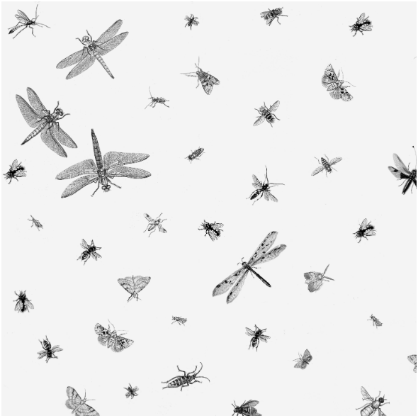 Fabric 16079 | OWADY CZARNO BIAŁE - INSECTS BLACK & WHITE